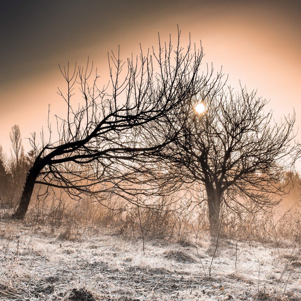 La resilienza degli alberi.